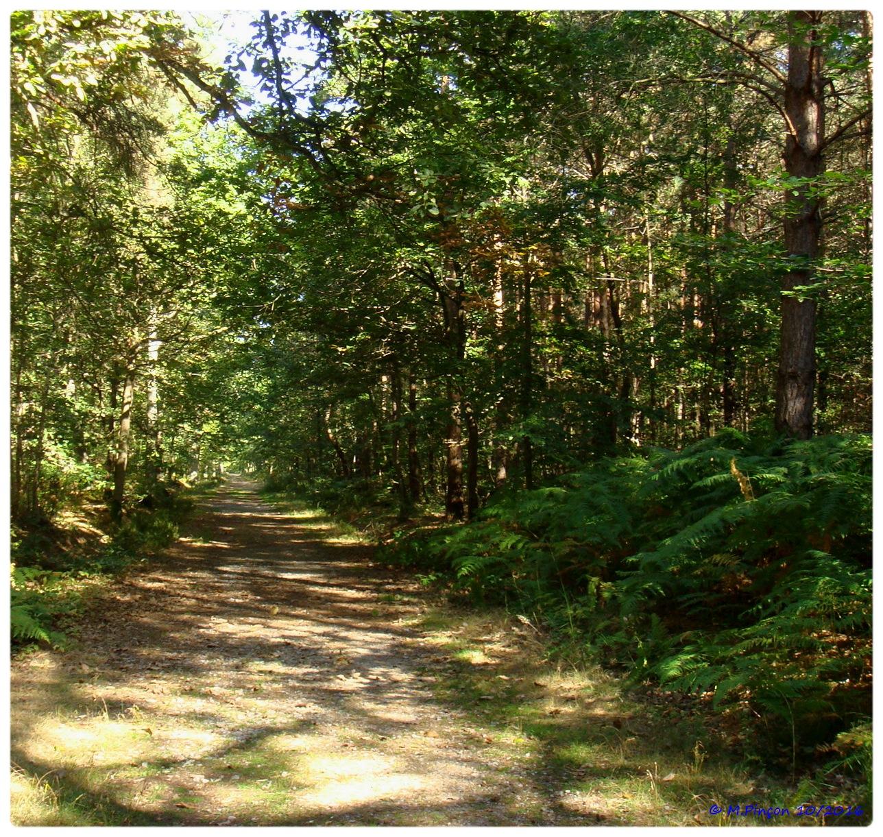 [fil ouvert] la forêt dans tous ses états - Page 6 533770DSC011090