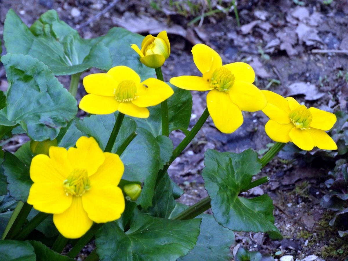 [Fil Ouvert] Fleurs 538404033Copier