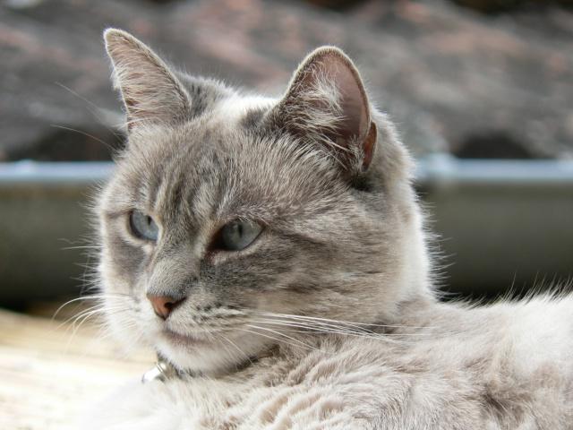 Miss Jicky. 540092P1120118