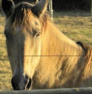 Présentez-nous vos chevaux ! <3 542683AEtincelle1