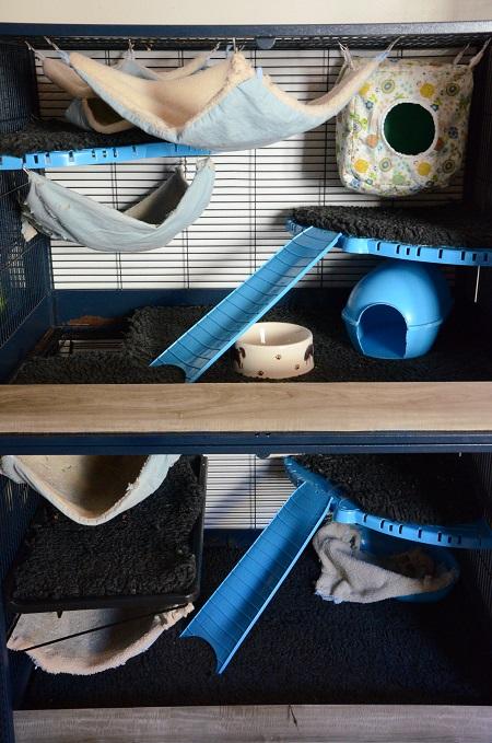 Aménagement cage savic royal 5431828830