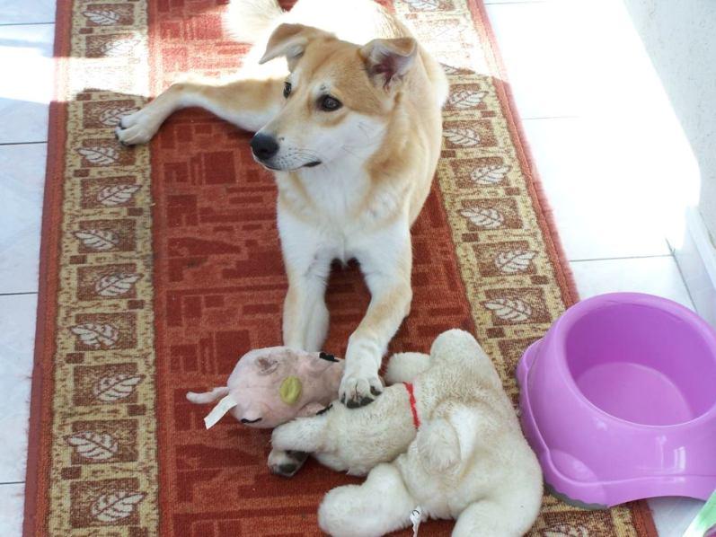 Corie, femelle, 3 mois, joli croisement, très sociable - 7 octobre 2011 - Page 2 54616360A
