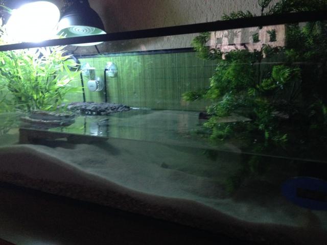 Aquarium pour sternotherus carinatus 551880IMG0991