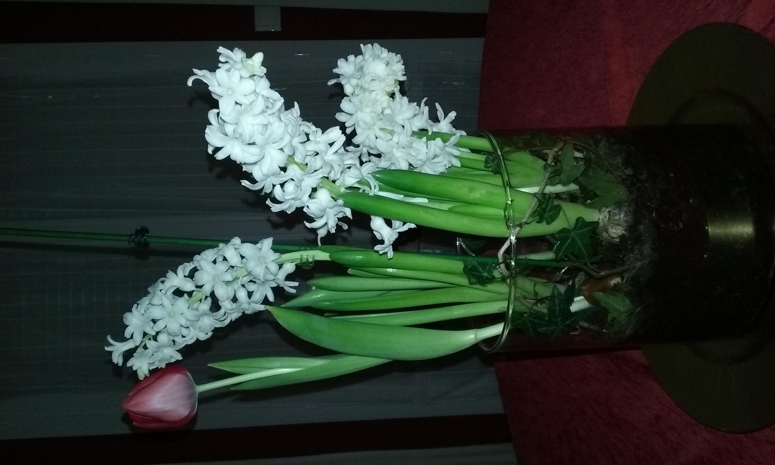 orchidées et fleurs d'hiver 553198201602232135211