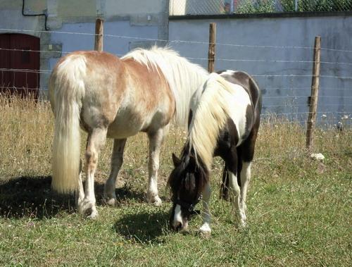 LOONY -  ONC poney né en 2001 - Adopté en juin 2011 par Carole 553414Loo2