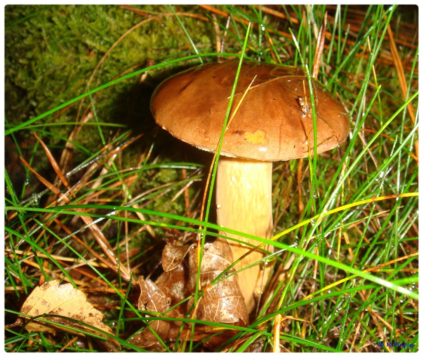 [fil ouvert] les champignons 558336DSC011194