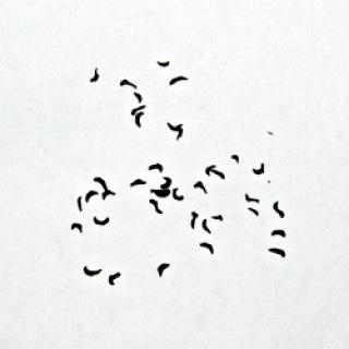 Drosera regia : questions sur les graines 560752img04802638frgrainesdroseraregiapng
