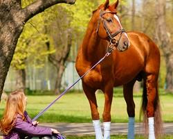 • Entretiens des chevaux