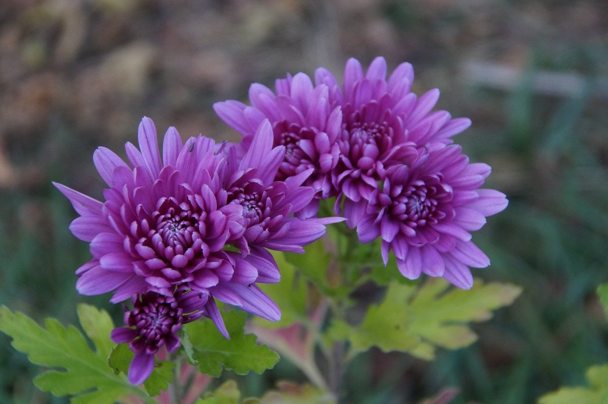 [Fil ouvert] Fleurs et plantes - Page 8 564553DSC07823