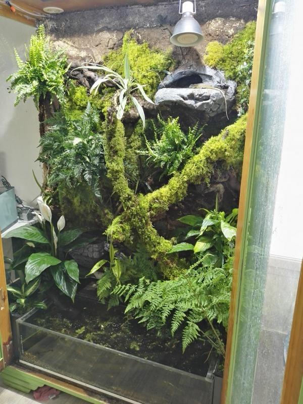 terrarium tropical dragons d'eau 5651432127