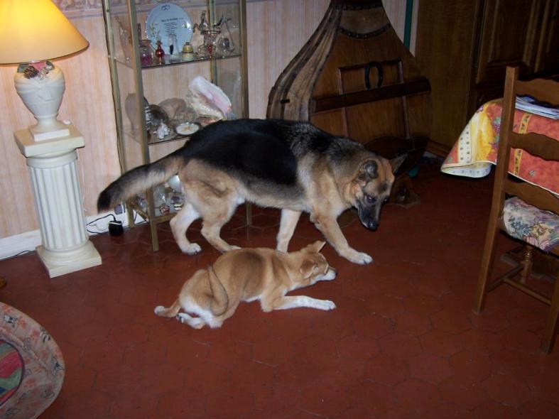 Corie, femelle, 3 mois, joli croisement, très sociable - 7 octobre 2011 - Page 2 56697411u