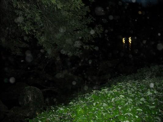 Orbs à un parc japonais 570978DSCN0989
