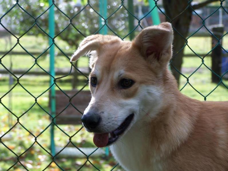 Corie, femelle, 3 mois, joli croisement, très sociable - 7 octobre 2011 - Page 2 57278247t
