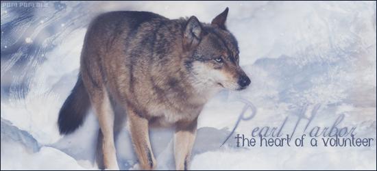 Vidéo Officielle de Legends Of Wolves 581755PearlHarbor