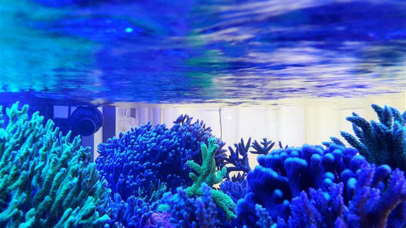 Akro's shallow Lagoon 583652s20150114101028mylittlereefathome