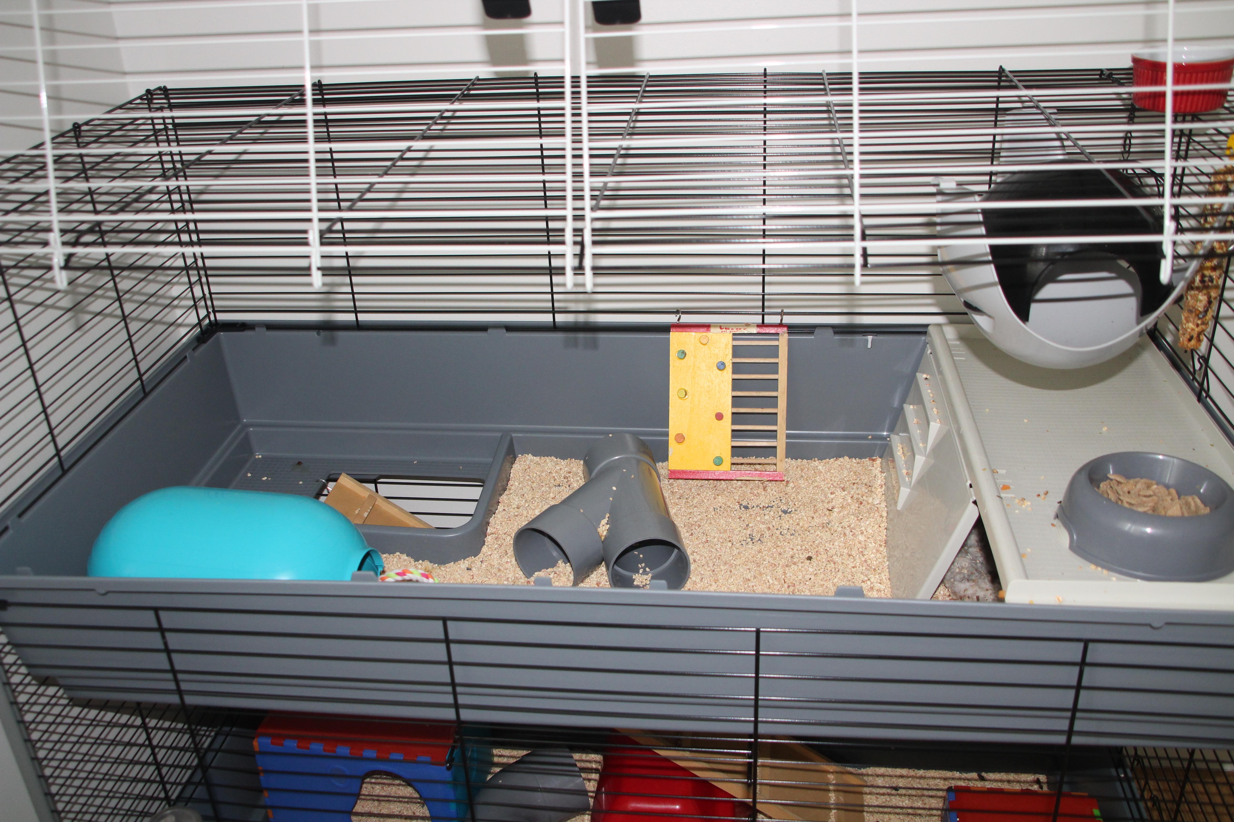 Cage à lapin pour mes rats 584215IMG1615