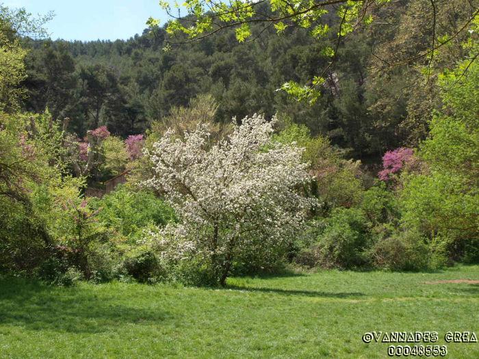 """La Vallée de St Pons """" La Vallée Rose """" à Gemenos Bouches du Rhône ♥♥♥ 5847209"""