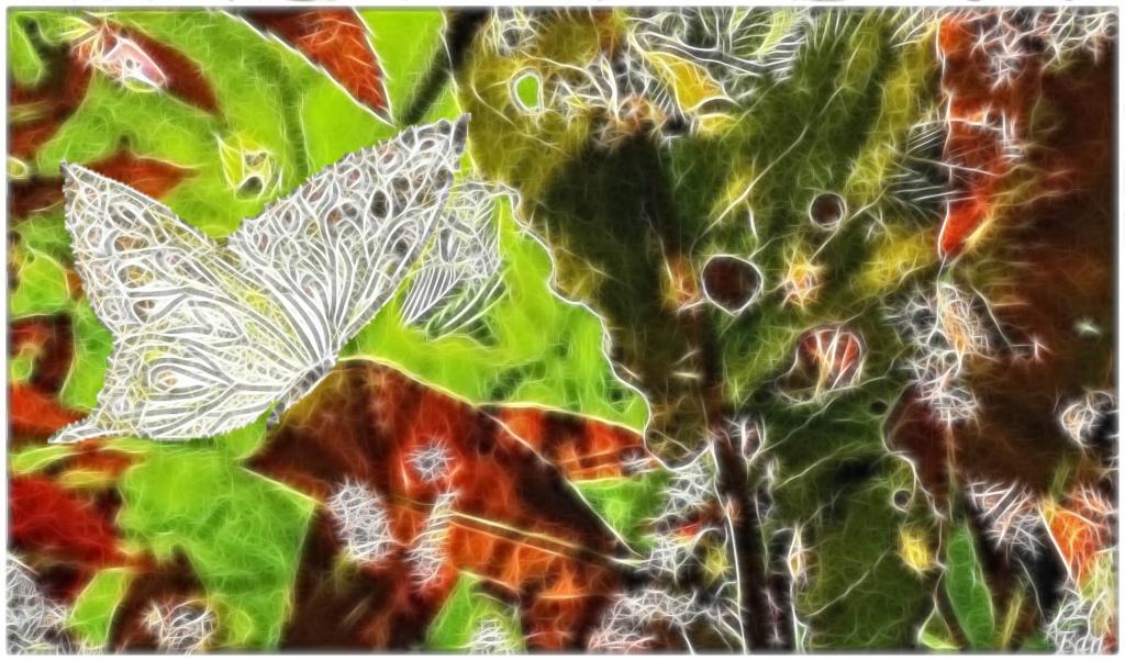 Fabrique d' IMAGES de Vagabonde (album:2) - Page 2 585992P1080374quarerfiltered02fractalius