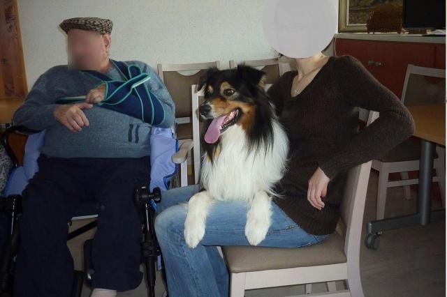Impact du chien sur la santé humaine - Page 3 588895dustyok