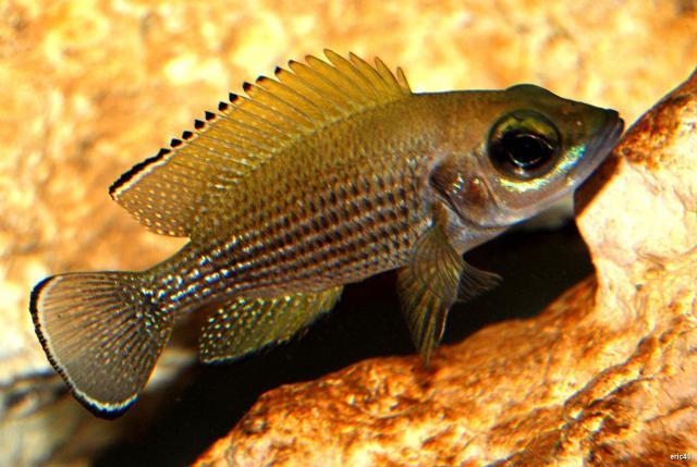 [ORCHIES 5 juin 2011] Tous poissons : j'amène, je recherche... - Page 3 590547DSC0008