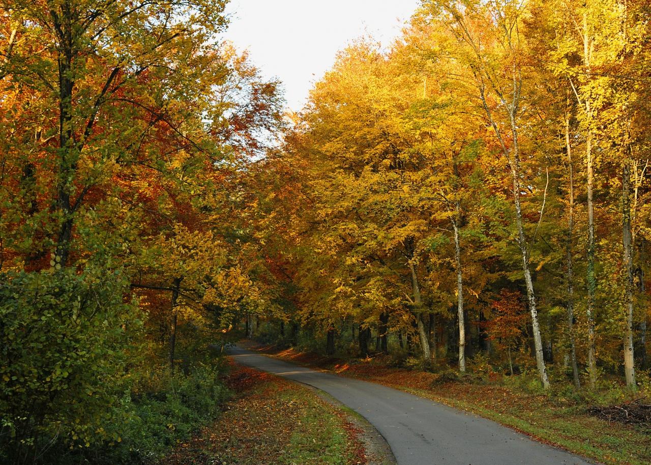 La forêt en couleurs 595649DSC2950