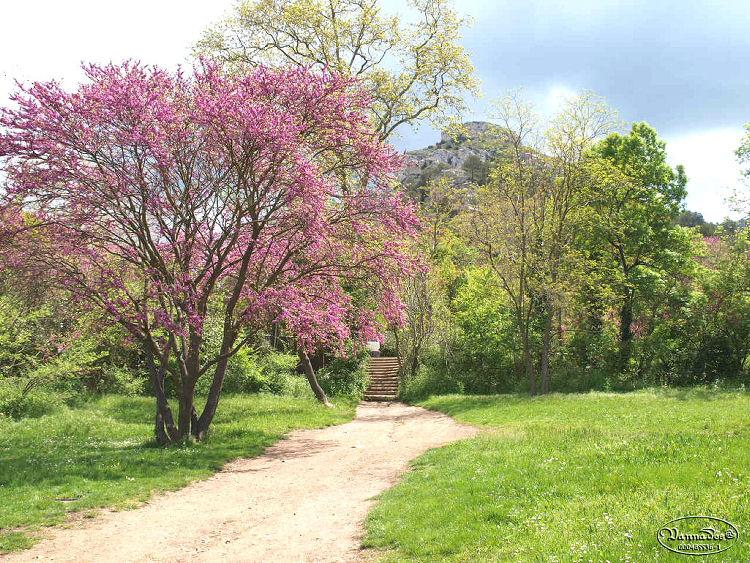 """La Vallée de St Pons """" La Vallée Rose """" à Gemenos Bouches du Rhône ♥♥♥ 596240Image1"""