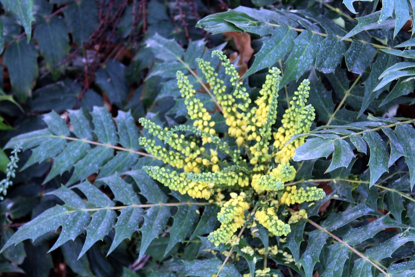 [Fil ouvert] Fleurs et plantes - Page 8 596461061Copier