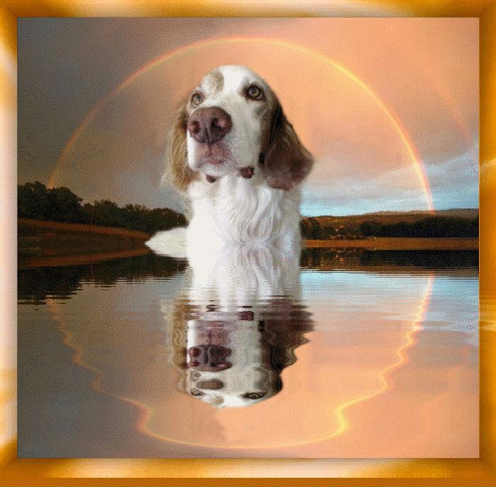 HOMMAGE pour mes Sept chiens 599758sultanetlarcenciel