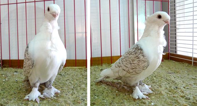 2014 - exposition d'aviculture Foire ST MATTHIEU 27 et 28 Septembre 2014 - Page 2 600152P1150729