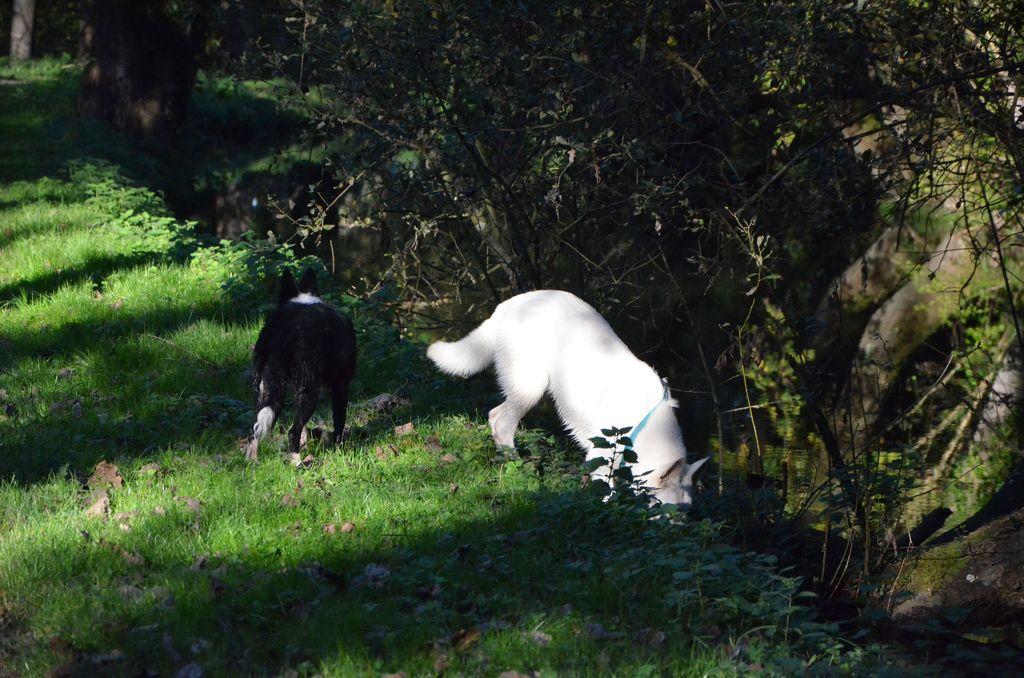 border - L'éducation de ma chienne, Jeune border collie - Page 2 604618DSC2269