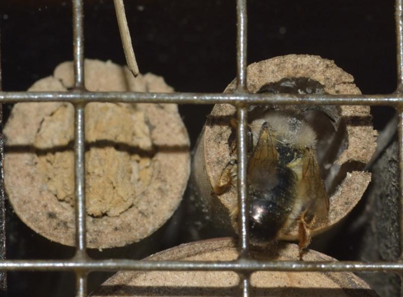 hôtels à insectes et autres HLM à bestioles  - Page 4 605476MAISONINSECTES4