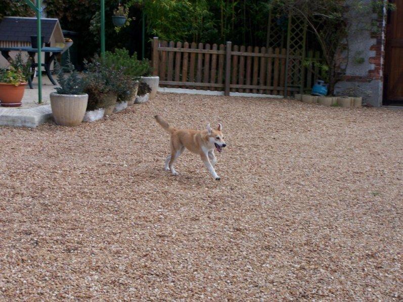 Corie, femelle, 3 mois, joli croisement, très sociable - 7 octobre 2011 - Page 2 61446964q
