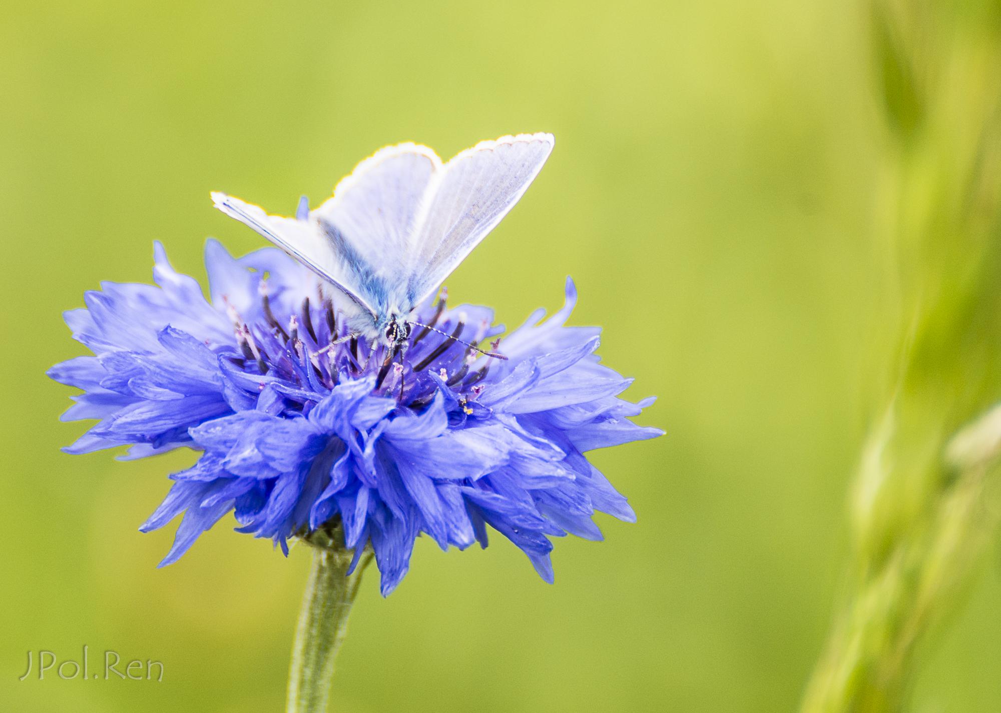 Bleu, bleu, azuré. 614607GE21pap0573