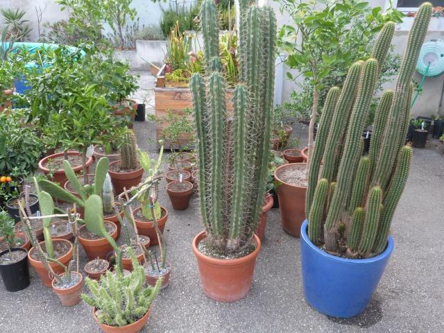 cactus 617532P1150493