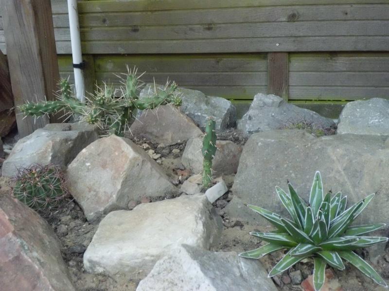 cactus de pô - Page 2 621577CIMG4351
