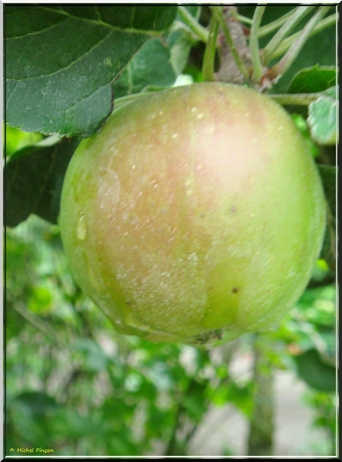 [Fil ouvert] Fruit sur l'arbre - Page 7 625963DSC013376