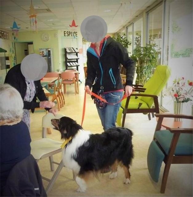 Impact du chien sur la santé humaine - Page 3 628556dustyiok