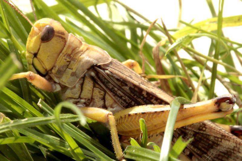 Elevage d'insectes en photos... Pourquoi pas?! 634961824