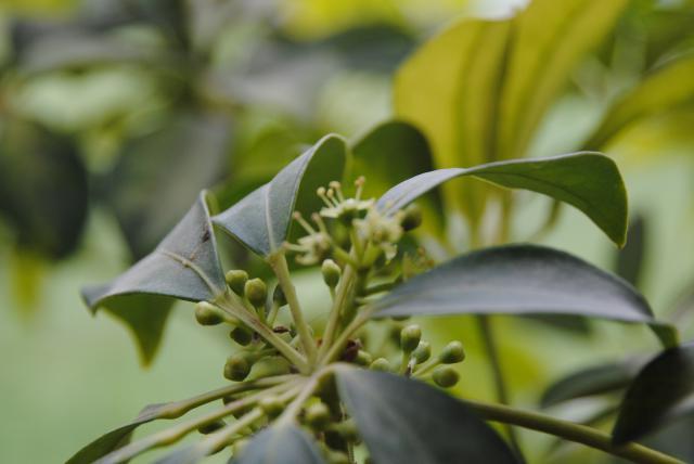 Après les orchidées, les hirondelles, mes plantes d'intérieur.... - Page 6 646398DSC3382JPG