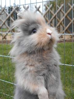 Ma lapine refuse la saillie 646491DSCN0425