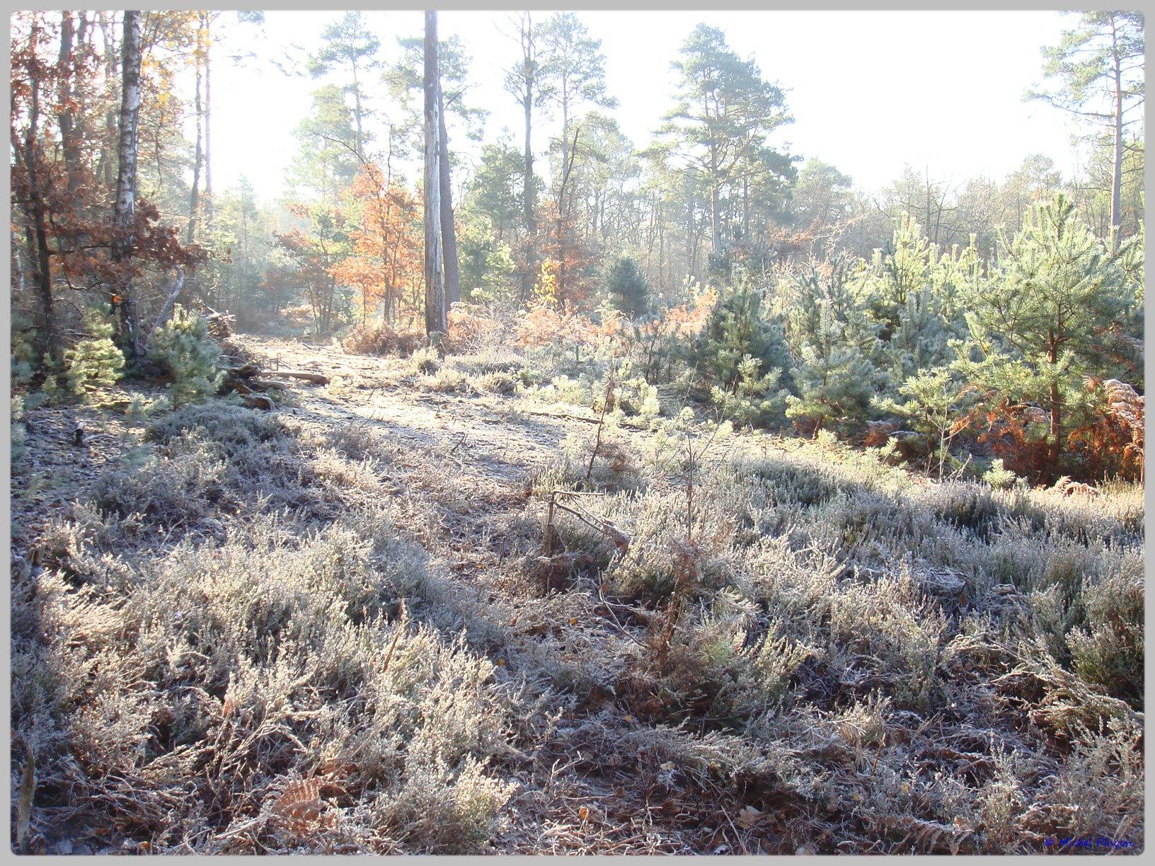 [fil ouvert] la forêt dans tous ses états - Page 11 647426DSC011664