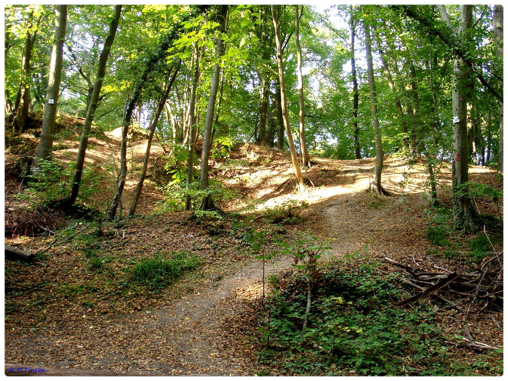 [fil ouvert] la forêt dans tous ses états - Page 6 647468DSC011150