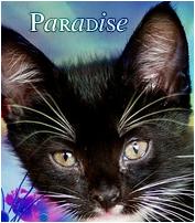 Petit Paradis => Mâle => Léopard [ Non libre pour l'instant ] 650618Vava
