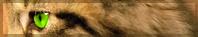 « Quand la coccinelle s'envole... » [Flamme Rousse] || END 656519BarreFlammeRousse
