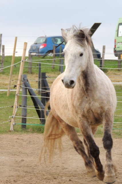 Estimation de nos chevaux ! - Page 4 657739DSCN3722
