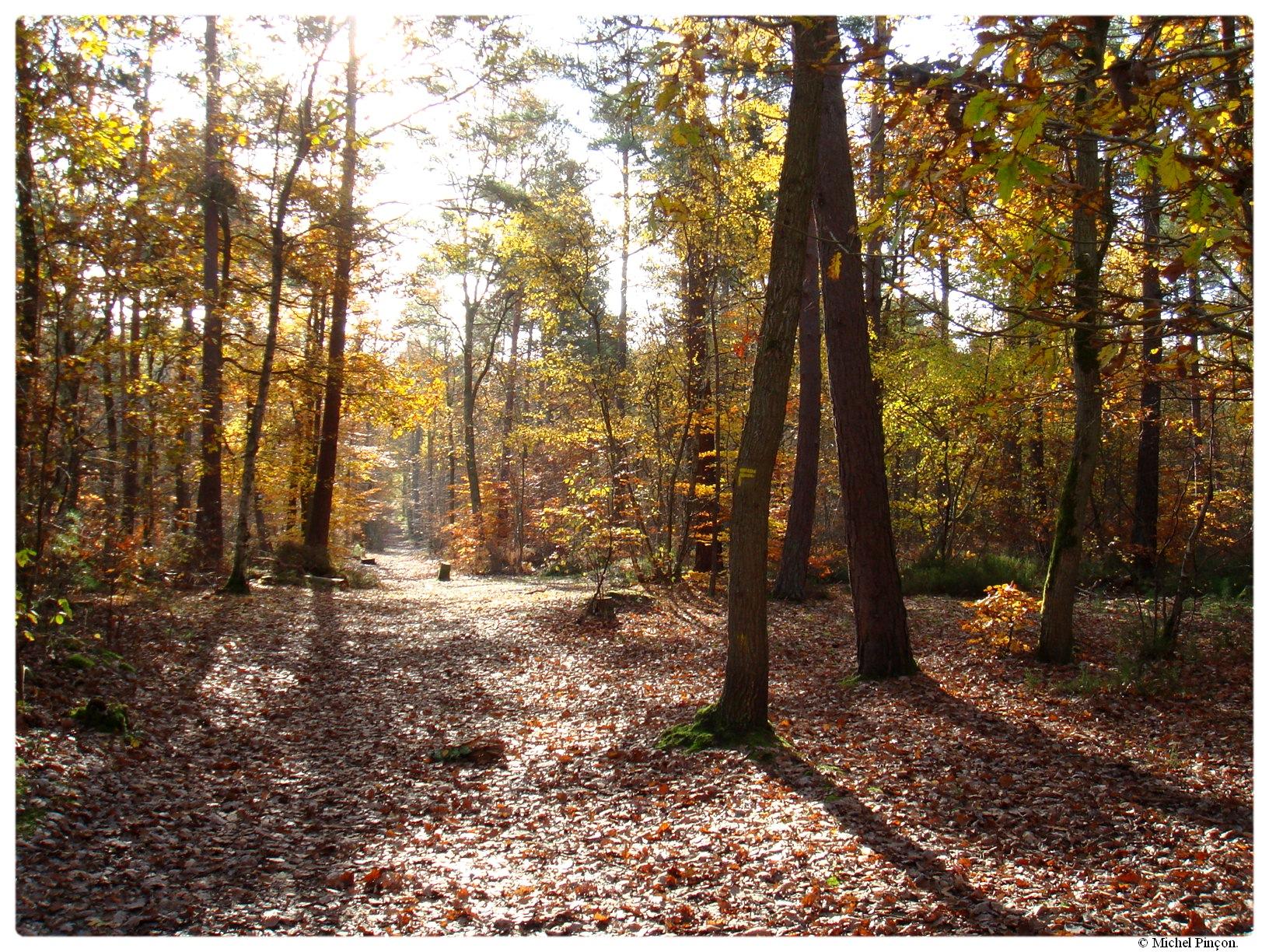 [fil ouvert] la forêt dans tous ses états - Page 17 669232DSC014380