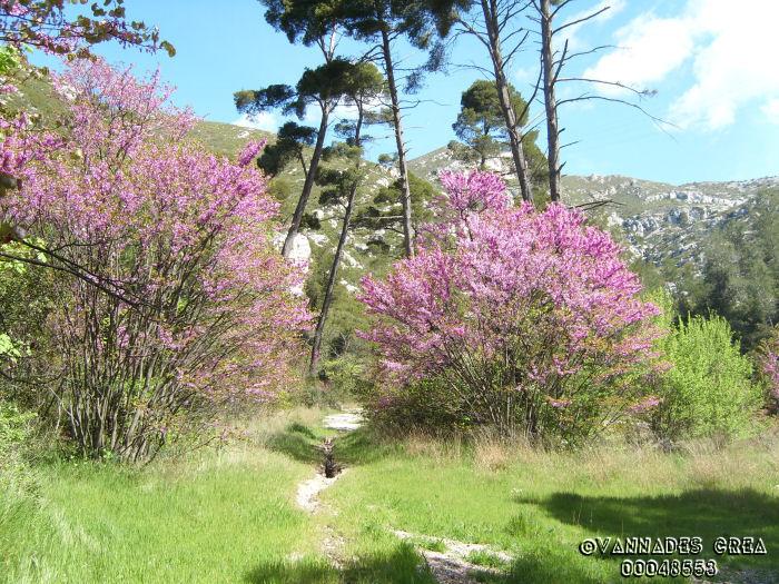 """La Vallée de St Pons """" La Vallée Rose """" à Gemenos Bouches du Rhône ♥♥♥ 6692466"""
