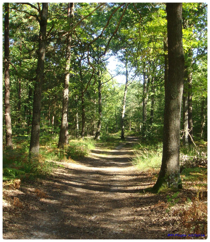 [fil ouvert] la forêt dans tous ses états - Page 6 673928DSC011069