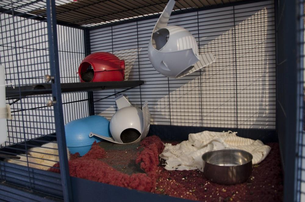 Photos de vos cages - Page 39 674140DSC0054