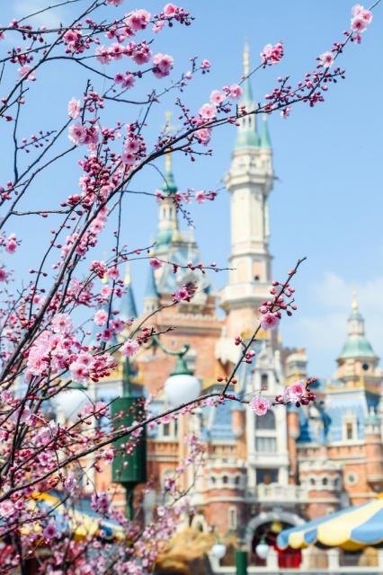 [Shanghai Disney Resort] Le Resort en général - le coin des petites infos  - Page 5 675104w405
